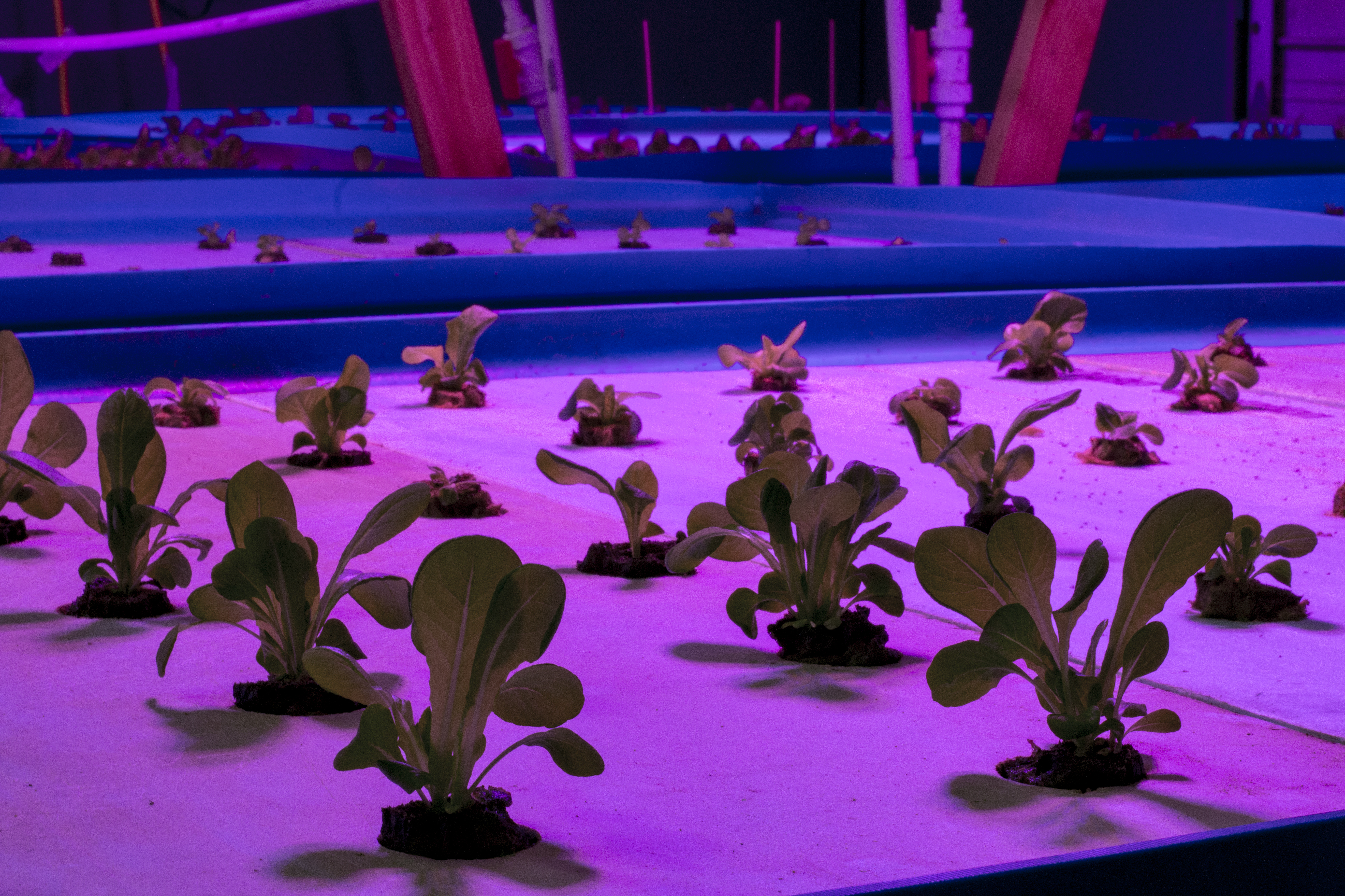 Aquaponics Facility producing herbs, vegetables and catfish for the Osage Nation